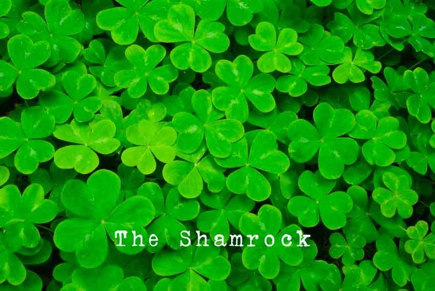 The Irish Shamrock Plant. A Symbol of Ireland.
